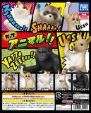 【A】200日元扭蛋 动物的勇气 全5种(1袋50个) 829505