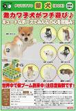 【B】盒蛋 PUTITTO系列 柴犬 杯边小手办 全8种 179091