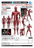 【A】可动手办 figma 桌面美术馆 人体模型(日版)510427